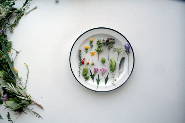 ++: Plating Styling Photography, Inspiration, Antufev Beautiful, Dried Flowers, Beautiful Flowers, Botanical, Floral