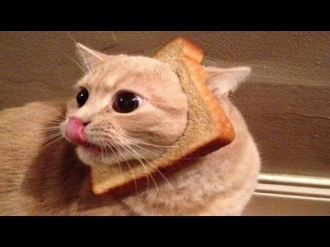 Lustige Videos Katzen