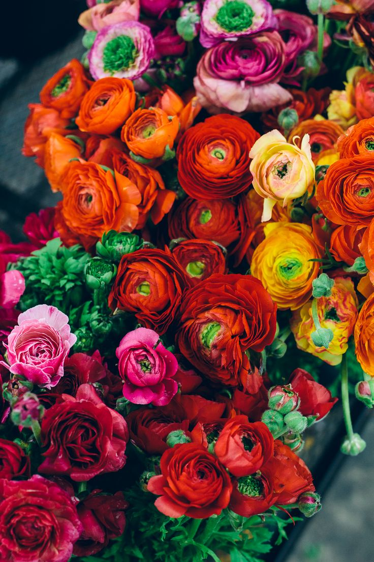 ranunculus, LA flower market, los angeles flower market — via