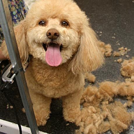 Best Dog Breeds For Charlotte Nc