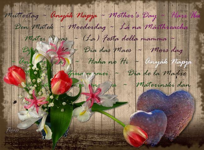 Kinszi Böngészde: Képeim - Anyák napja