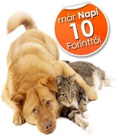 Macska, kutya állatbiztosítás