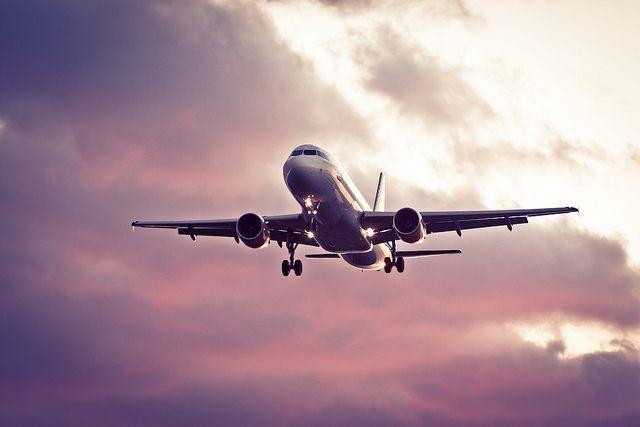 Recomendaciones para viajar con perros en avión, tren o barco