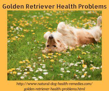 Common health problems in Golden Retrievers.