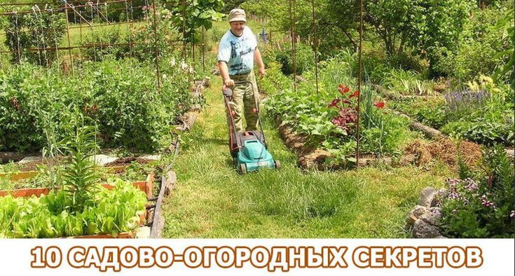 «Солим» лук или 10 садово-огородных секретов;)