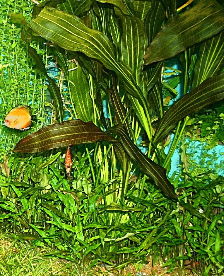 65 best florida images on pinterest florida palm trees for Fish tank riddle