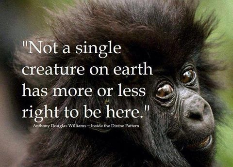 """Not a single creature on earth has more or less right to be here."" ~ Anthony Douglas Williams"