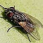 How to Keep Flies Away Outdoors | eHow