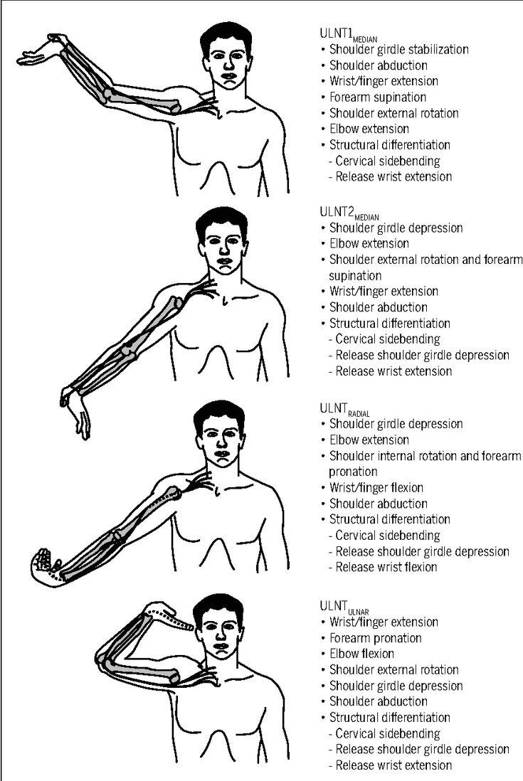 Pin on anatomically correct