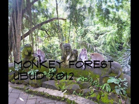 Monkey forest Ubud 2012