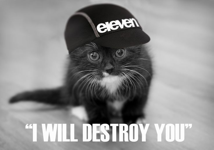 Eleven Sprocket B.A Kitty