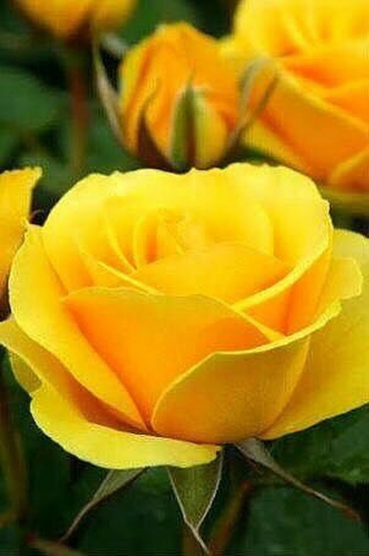 1864 Best Yellow Golden Images On Pinterest Yellow