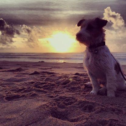 Dog Friendly Hotels Bethany Beach