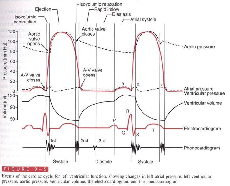 Wiggers Diagram   nursing infoeducation   Cardiac cycle