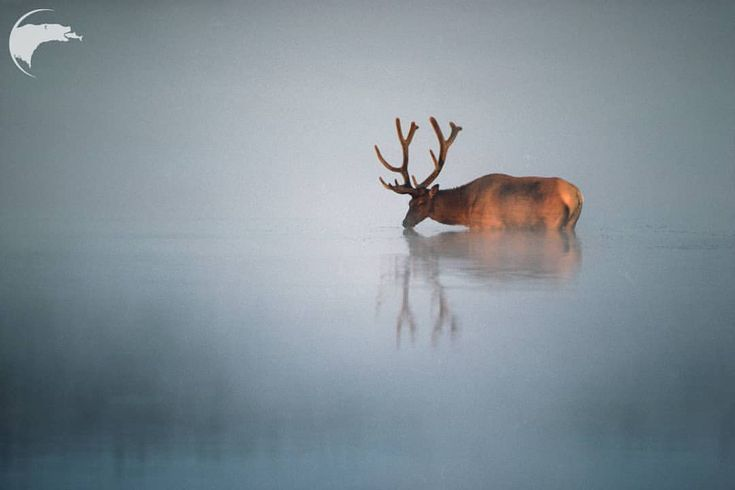 Spectacular Wild Animals Photography by Thomas D Mangelsen – Wanna draw dis