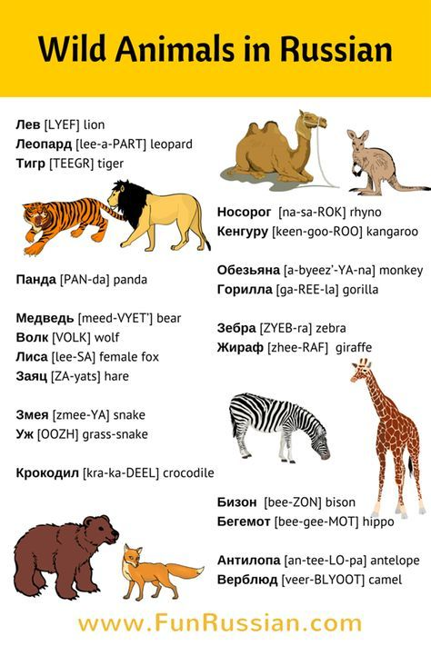 Wild Animals in Russian Video: Learn New Russian Words