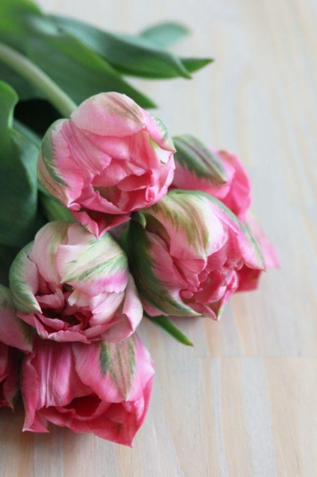 la mariee aux pieds nus Tulipe