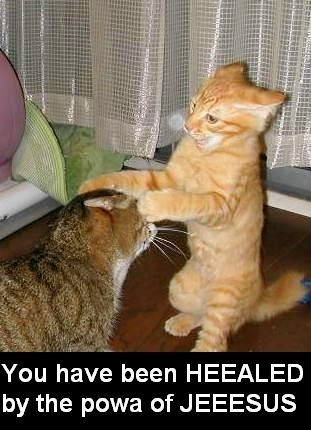 you are healed!Funny Kitty, Laugh, Funny Pictures, Funny Cat, Funny Animal, So Funny, Funny Pranks, Silly Cat, Animal Funny