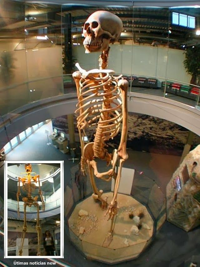 36 best gigantes existieron existen!!!!!!! images on pinterest, Skeleton