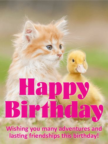 To Sweet Friend - Happy Birthday Card: Grab your best pal and have an adventure this birthday! This simple birthday greeting is sweet and fun. Furry cats and fuzzy chicks are odd pairs but sweet friends. Here's to the strength in our differences and the power of friendship. Send a refreshing birthday message to someone who could use a kind birthday greeting to light up their special day.