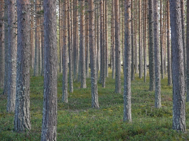 #Typical #Finnish #Landscape