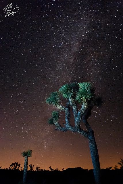 Milky Way, Joshua Tree National Park, Twentynine Palms, California  (via source)