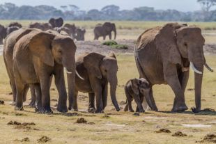 Success: China Bans Ivory Trade | ForceChange