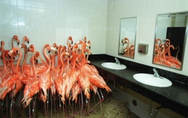 Flamingos out Night