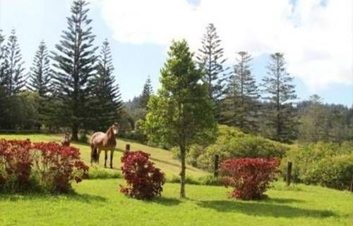 Hamish's Cottages Norfolk Island Set on 15 acres of rural property, Hamish's Cottages is just a 10-minute drive from the beautiful beaches at Emily Bay. All self-contained cottages feature a fully equipped kitchen and a balcony with garden views.