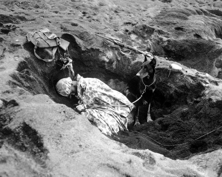 A Doberman guarding a sleeping U.S. Marine during the Battle of Iwo Jima