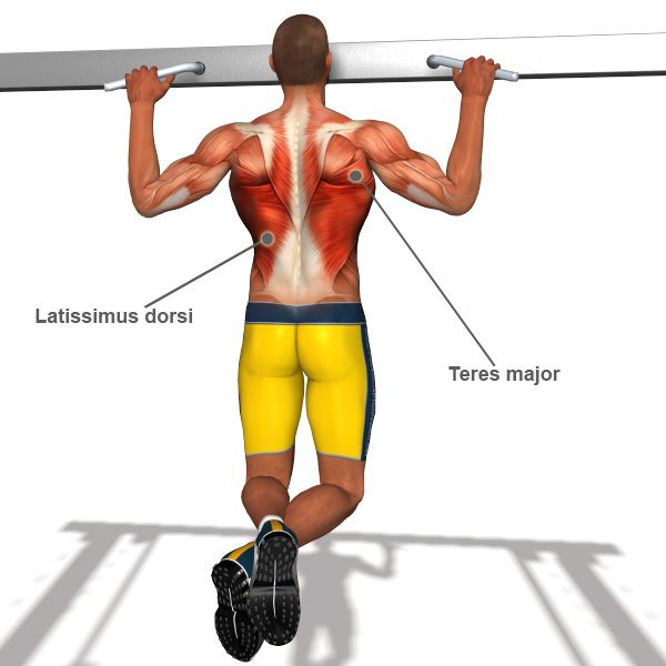 1000 images about exercise for back muscles on pinterest core