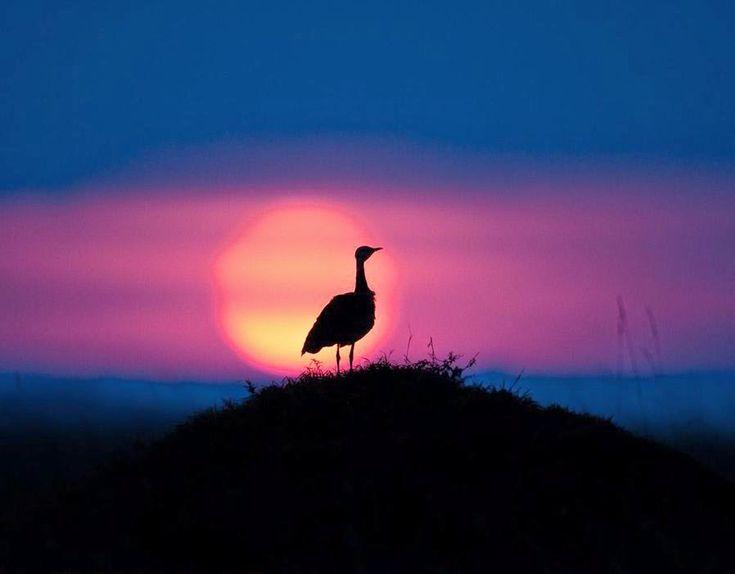مجموعة من أجمل صور غروب الشمس في كينيا Star Wallpaper Sunset Art Photography