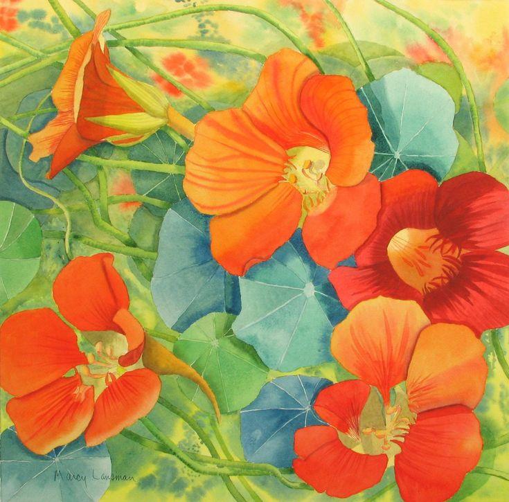 31 best Flowers Nasturtium images on Pinterest Art flowers