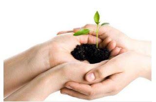 Interflores - Floricultura Online