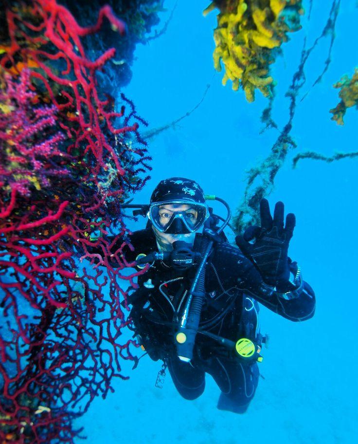 Ayvalık dalış okulu - ida dalış merkezi #scuba #scubadiving #diving #underwater #dalisnoktam #ayvalikdalis #daliskursu #dalismerkezi #ayvalik #ayvalık #idadalismerkezi www.idadiving.com