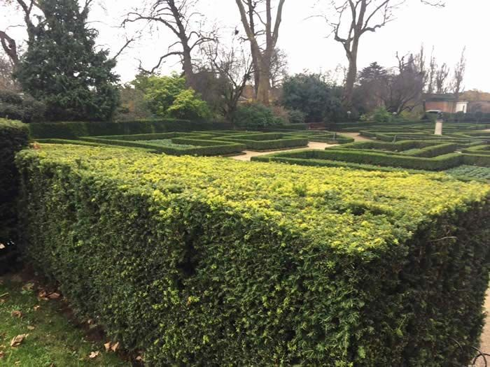 The Benefits Of Garden Hedges In 2020 With Images Garden Hedges Benefits Of Gardening Hedges