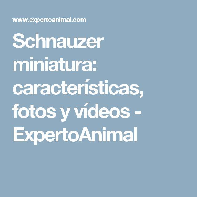 Schnauzer miniatura: características, fotos y vídeos - ExpertoAnimal