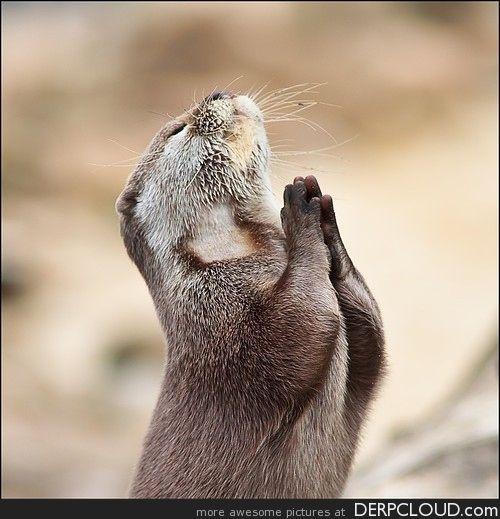 Resultados de la Búsqueda de imágenes de Google de http://derpcloud.com/wp-content/uploads/2012/02/funny_otter_marmot_praying.jpg