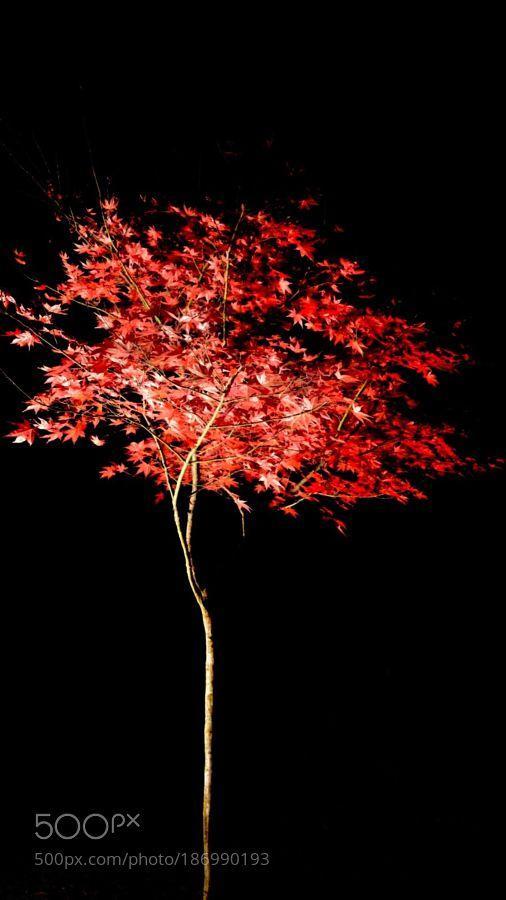 長瀞の紅葉 - 月の石紅葉公園の紅葉埼玉県秩父