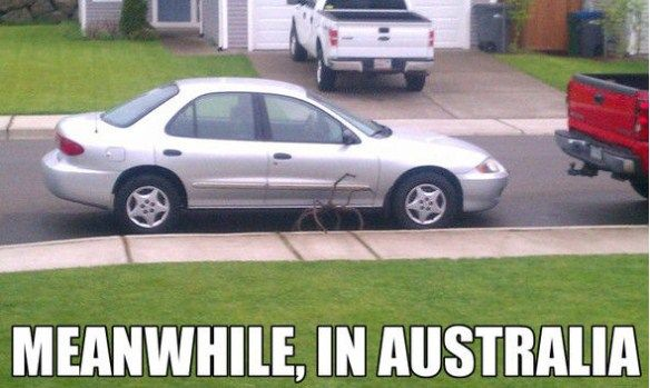 Meanwhile in Australia...Giant spider under a car. #funny