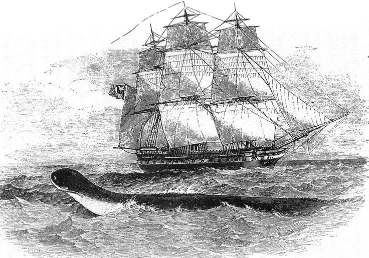 On August 6, 1848, Capt. Peter M'Quhae of the HMS Daedalus and several of his officers and crew in the South Atlantic saw a sea serpent that was subsequently reported (and debated) in The Times. The vessel sighted what they described as an enormous serpent between the Cape of Good Hope and St Helena. It was swimming with four feet of its head above the water; they believed that there was another sixty feet of the creature in the sea.