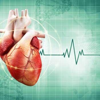 Cardiologue [Fiche métier SIEP, Belgique] - Ce spécialiste des maladies du cœur ou cardio-vasculaires veille au dépistage, au diagnostic, au traitement et à la prévention des pathologies telles que souffle au cœur, artère congestionnée, infarctus… Son champ d'intervention s'etend de la prévention primaire jusqu'à l'urgence vitale, du domaine cardiologique pur au monde des gros vaisseaux. Requis pour exercer en Belgique: un Titre Professionnel Particulier (TPP) de cardiologue.