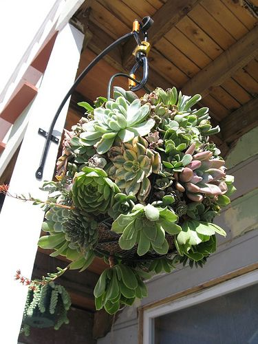 Hanging succulent planter | Flickr - Photo Sharing!