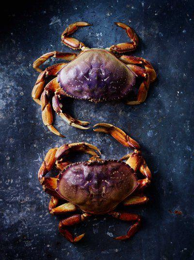 Purple crabs touching. Photo by Maya Visnyei