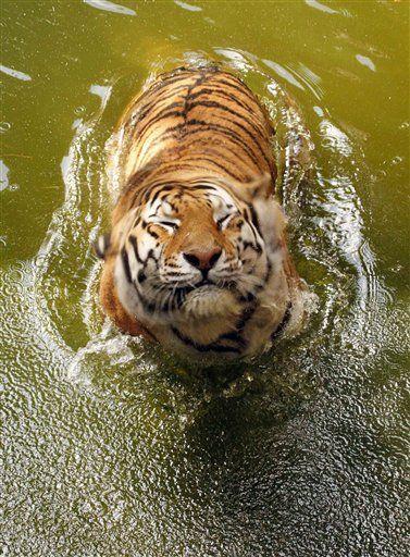 En train de pisser dans la piscine.