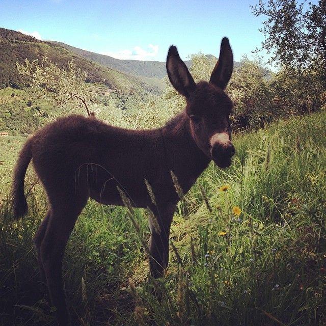 Un benvenuto a Mora la nostra nuova amica