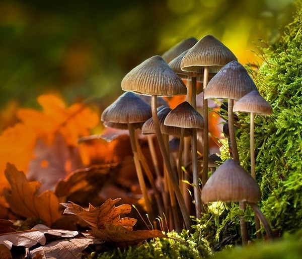 Macro 10 handpicked ideas to discover in photography snowflakes macro photo and chameleon eyes - Wild mushrooms business ideas ...