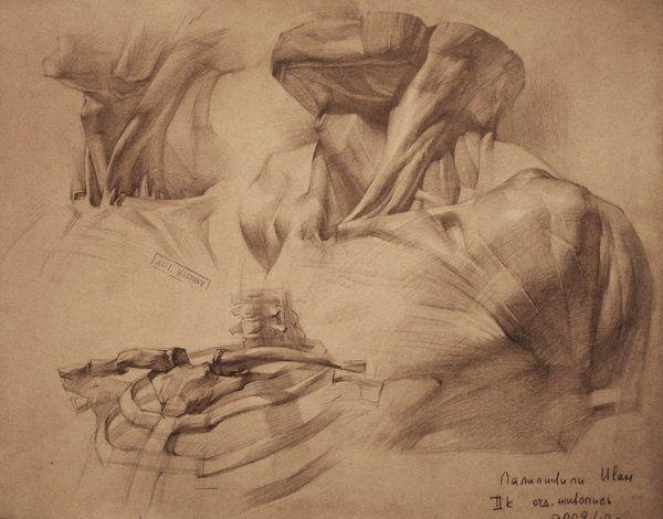 human anatomy 7 by ivany86.deviantart.com on @deviantART