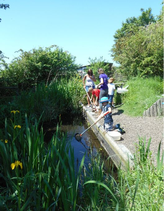 Our fantastic pond- don't be deceived by its size- it holds so much life! Catherine (BBOWT) Photo from Haddenham St Marys School.