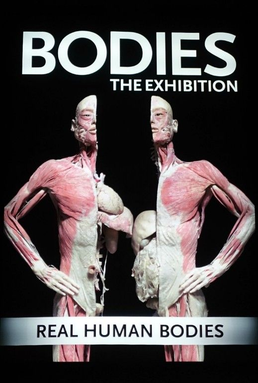 BODIES:  The Exhibition - a must see attraction when in Las Vegas